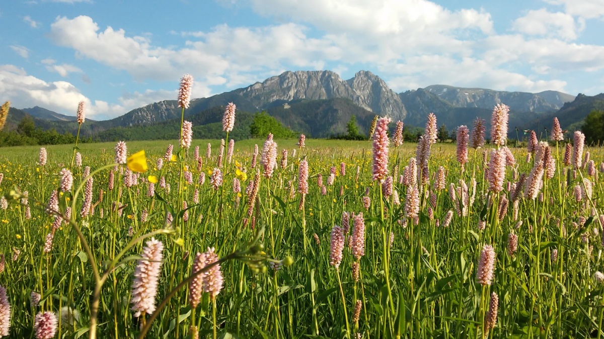 SUMMER HOLIDAYS IN TATRA MOUNTAINS!